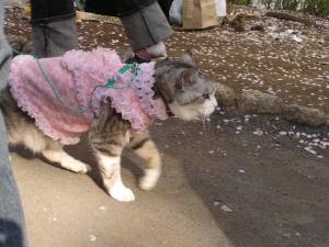 ま、どっちにしても服を着た犬も猫もキライぢゃけどね(笑)